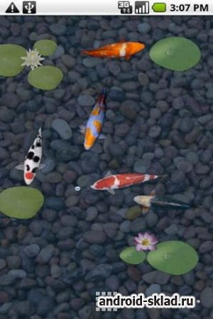 Koi Live Wallpaper Full - живые обои с рыбками карпами для Android