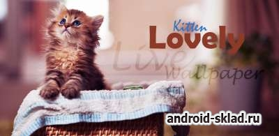 Lovely Kitten Live Wallpaper - обои с котятами
