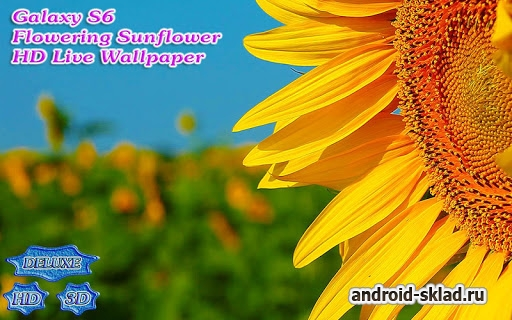 Galaxy S6 Flowering Sunflower